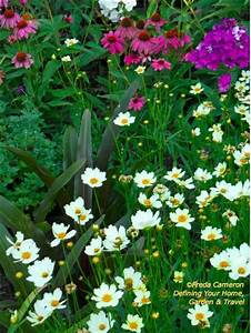 Defining Your Home, Garden and Travel: Coreopsis (and ...