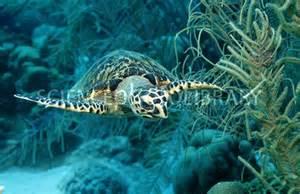 Caribbean Sea Animals