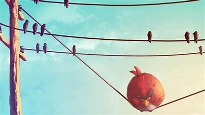 Birds Funny Angry Bird Fat Wire Wallpapers