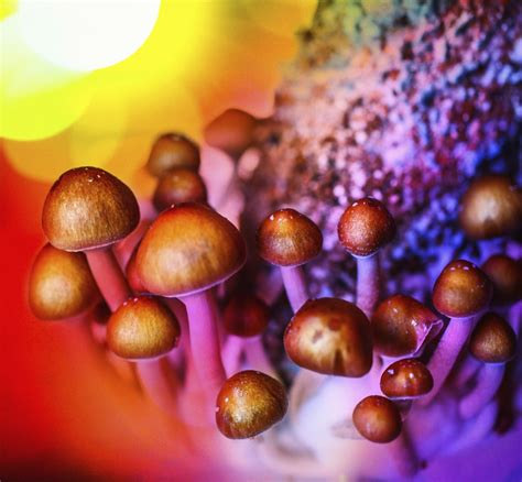magic mushroomshallucinogenic drug reduces depression