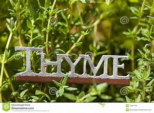 Fresh Thyme Leaves Stock Photography | CartoonDealer.com ...