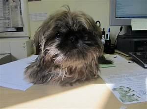 avid dog microchip change address With avid dog
