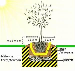 Planter Un Olivier En Pleine Terre : planter un olivier quand ~ Farleysfitness.com Idées de Décoration