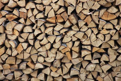 Kostenlose Foto Baum Rock Ast Holz Textur Blatt