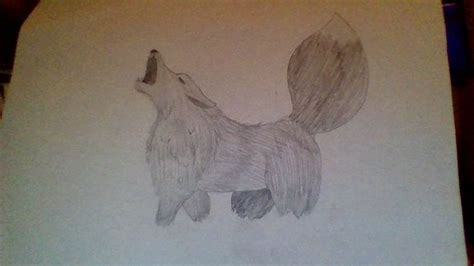 draw  realistic wolf  pictures wikihow