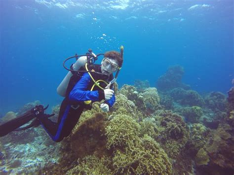 Cozumel Dive Dive Office At Hotel Cozumel Picture Of Dive Paradise
