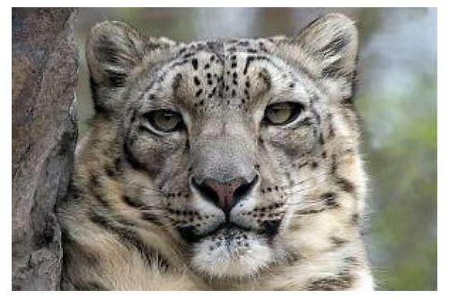 requisitos de baixar do snow leopard gratis