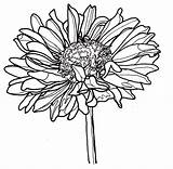 Coloring Zinnia Pages Single sketch template