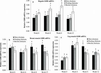 Growth Receptor Hormone Ghr Comparison Expression Mrna