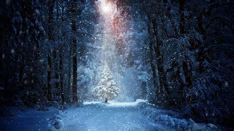 forest winter snow landscape sunlight wallpapers hd