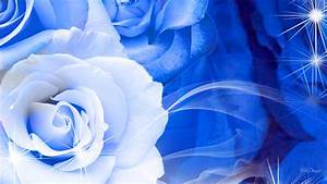Blue And White Rose Wallpaper 6 Hd Wallpaper ...