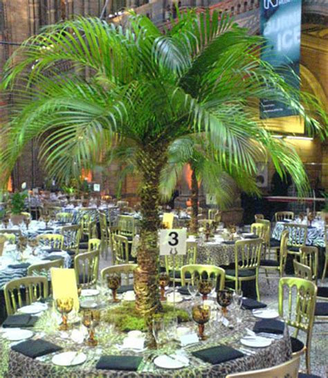 table top palm tree palmbrokers catalogue palm trees for hire table top