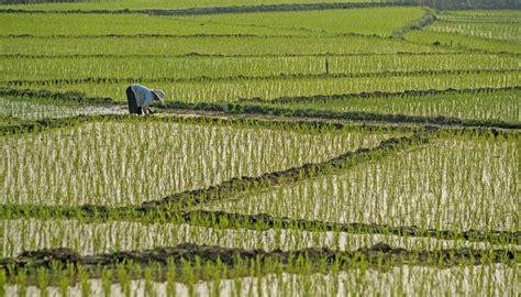 rice paddy fields hainan china  style traveller
