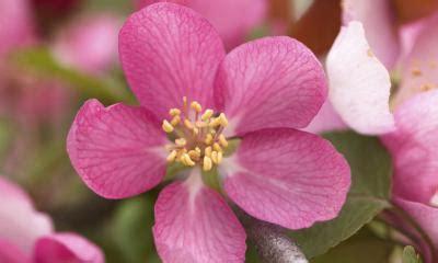 fiori di bach in menopausa fiori di bach contro le vate un valido aiuto in menopausa
