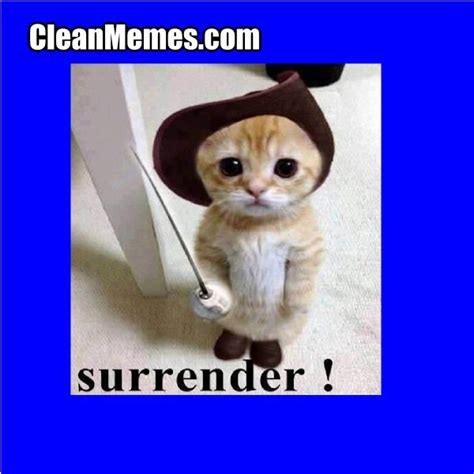 Funny Cat Memes Clean - 139 best images about love your cat on pinterest warrior cats funny cat wallpaper and cats
