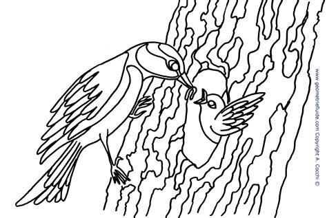 da colorare cinciarella e pulcino da colorare uccelli da colorare