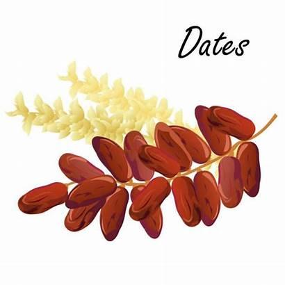 Dates Date Shutterstock Fruits Palm Fruit Vectorielle