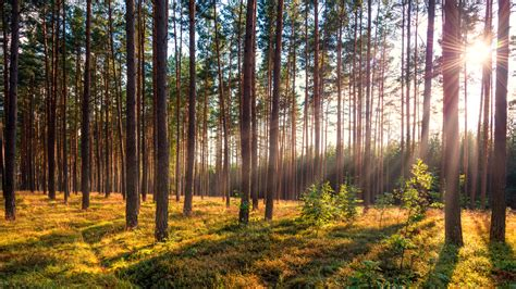 sustainable ecosystems renewable resource management