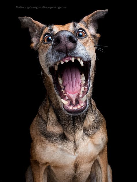 charmingly facial expressions  photographers dogs