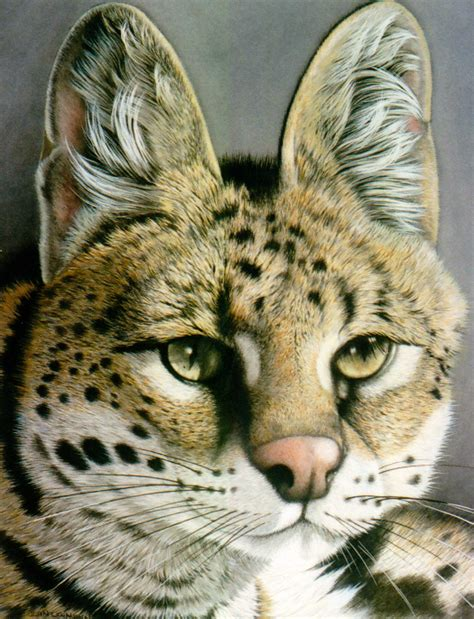 African Serval Cat Price