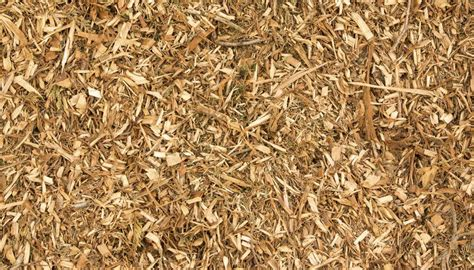 is mulch toxic is eucalyptus mulch toxic to plants garden guides