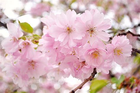 Dünyanın En Güzel Çiçekleri Seçildi (Dünyanın En Güzel 25