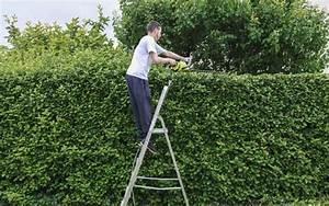 Prix Pour Tailler Une Haie : quels sont les travaux de jardinage faire en mars ~ Dailycaller-alerts.com Idées de Décoration