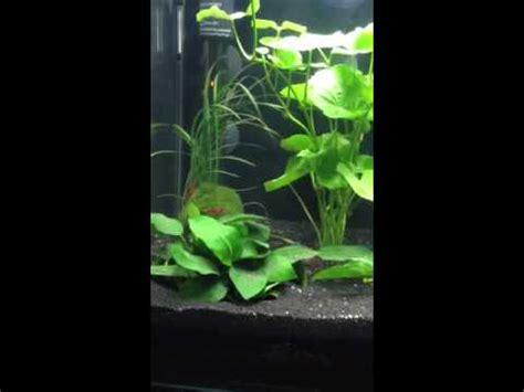 nano cube dennerle aquarium eau douce