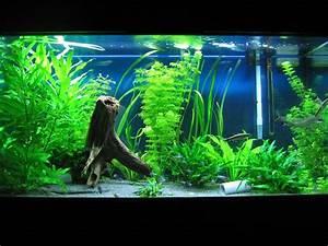 Fish Aquarium Decor Ideas Aquarium Design Ideas