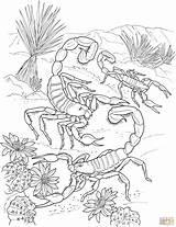 Desert Coloring Scorpion Printable sketch template