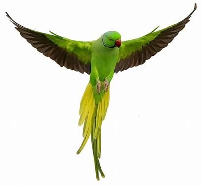 Suara Parrot Burung Ekogeo Dan Seribu