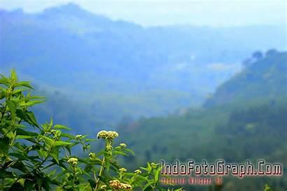 Pemandangan Alam Pedesaan Gambar Gunung Dan Animasi