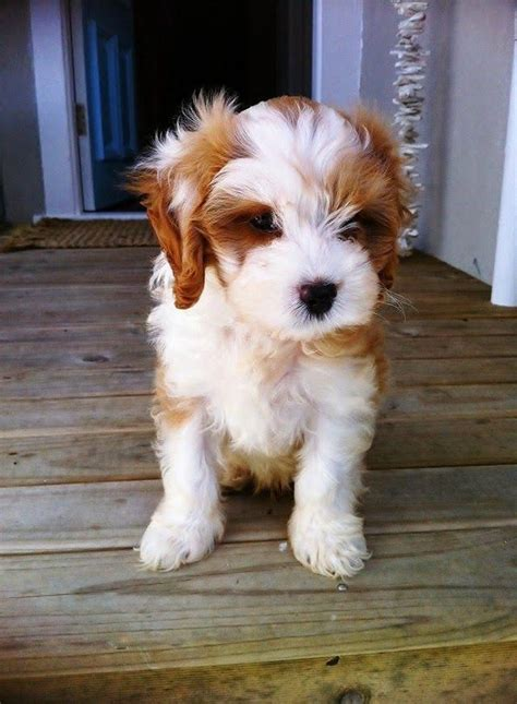 discover additional info  cute dogs    internet site puppies cute dogs cutest