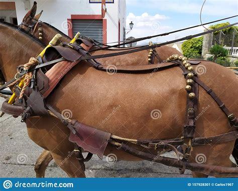 mules andalusian feria animals