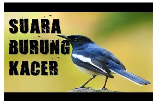 download suara burung kacer trotol