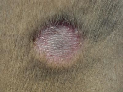2 dog skin patches circular in shape missing fur and scaly