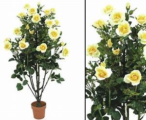 Getrocknete Blüten Kaufen : rosenbusch zartcremig mit bl ten online kaufen ~ Orissabook.com Haus und Dekorationen