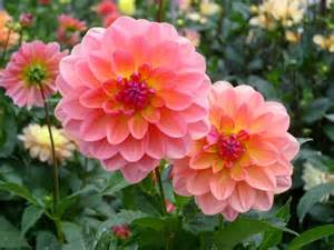 Beautiful Cute Flowers