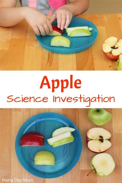 simple science investigation into apples with the 5 senses 585 | apple science0