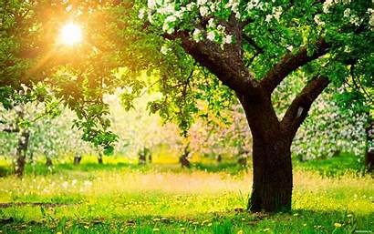 Spring Bright Morning Nature Wallpapers Desktop Sunshine
