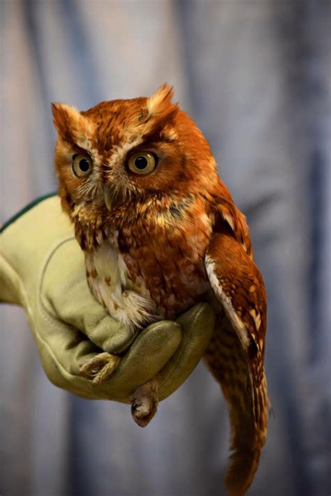 owl zoo found injured wtop local
