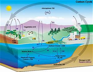 The Global Carbon Cycle  Courtesy Of Nasa
