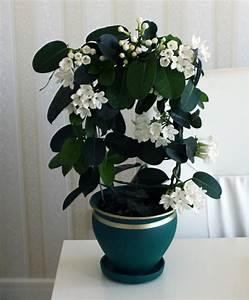 Pflegeleichte Pflanzen Für Die Wohnung : pflegeleichte zimmerpflanzen 18 vorschl ge ~ Michelbontemps.com Haus und Dekorationen