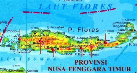 map  flores pt vip  travel bali hotels villas