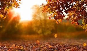 Fall, Leaves, Leave, U0026, 39, Em