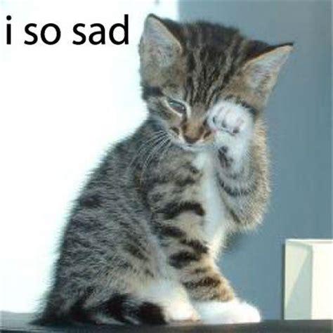 Sad Cat Meme - i so sad cat meme cat planet cat planet