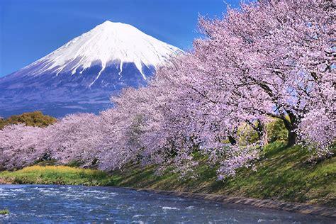 photographing sakura  japan scenic spots pro