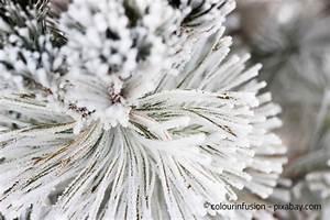 Gartenarbeit Im Februar : gartenarbeit im winter diese arbeiten fallen zwischen ~ Lizthompson.info Haus und Dekorationen