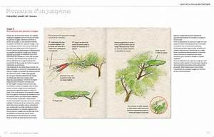 Arbre En Nuage : la taille des arbres en nuage livre de christian coureau ~ Melissatoandfro.com Idées de Décoration