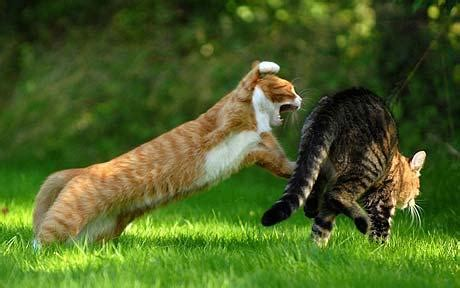 Cute Cat Stories